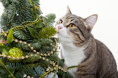 Chat et l'arbre de Noël Image libre de droits