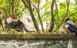 Chat et la corneille photo stock