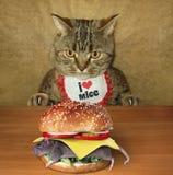 Chat et mouseburger Photos stock