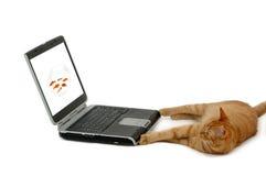 Chat et ordinateur portatif Photographie stock