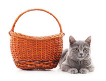 Chat et panier gris Photos stock