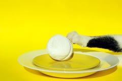 Chat et paraboloïde Cat Steals Food From Table Image libre de droits
