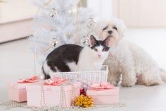 Chat et petit chien se reposant ensemble près de l'arbre de Noël Photo stock