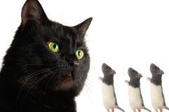 Chat et rat images stock