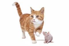 Chat et rat Photographie stock libre de droits