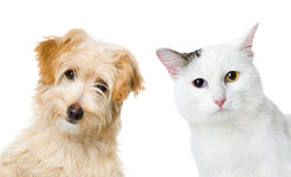 Chat et regard et appareil-photo de chien D'isolement sur le fond blanc Image libre de droits