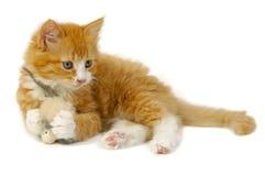Chat et souris Photographie stock