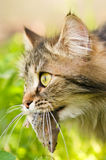 Chat et souris Image stock