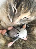 Chat et souris caressant Image stock