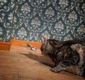 Chat et souris dans une salle démodée de luxe Photographie stock