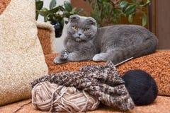 Chat et tricotage sur le sofa images libres de droits