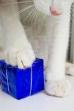 Chat et un cadeau Photo libre de droits