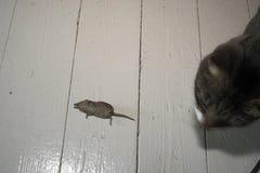 Chat et une souris image libre de droits