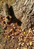 Chat et ver laineux Photo stock