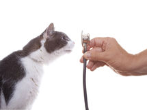 Chat examinant un stéthoscope Photographie stock
