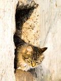 Chat extérieur Photos stock