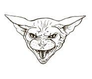 Chat fâché de la race de sphinx, Photo stock