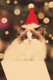 Chat Fête de Noël, chat de vacances d'hiver avec le boîte-cadeau Chat d'an neuf Arbre de Noël dans l'intérieur Photo libre de droits