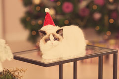 Chat Fête de Noël, chat de vacances d'hiver avec le boîte-cadeau Chat d'an neuf Arbre de Noël dans l'intérieur Photos stock