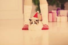 Chat Fête de Noël, chat de vacances d'hiver avec le boîte-cadeau Chat d'an neuf Arbre de Noël dans l'intérieur Photos libres de droits