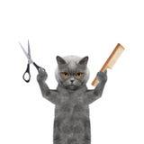 Chat faisant le toilettage avec les ciseaux et le peigne Photographie stock libre de droits