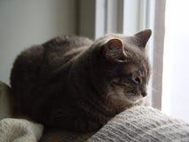 Chat faisant une sieste près d'un hublot Image libre de droits