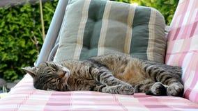 Chat fatigué balançant sur une oscillation clips vidéos
