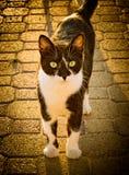 Chat gentil en portrait de rue Image stock