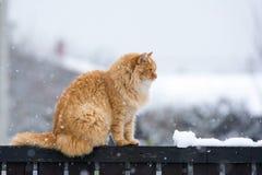 Chat gentil sur la barrière de neige photographie stock