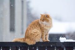 Chat gentil sur la barrière de neige photos stock