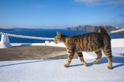 Chat grec Photo stock