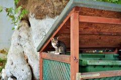 Chat grec Photo libre de droits