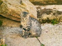 Chat gris à une ferme Image stock