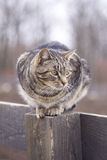 Chat gris Images stock