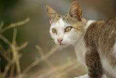 Chat gris - avec des chemins de découpage. Images libres de droits