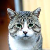 Chat gris avec les yeux verts sur le fond de jardin photos libres de droits
