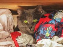 Chat gris caché dans la garde-robe images libres de droits
