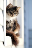 Chat gris dans l'hublot Photos libres de droits