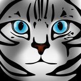 Chat gris de museau avec des yeux bleus Photo libre de droits