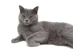 Chat gris dormant sur un plan rapproché blanc de fond Photographie stock libre de droits