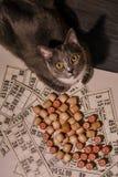 Chat gris et bingo-test Vieux jeu de table de loto avec le chat Images libres de droits
