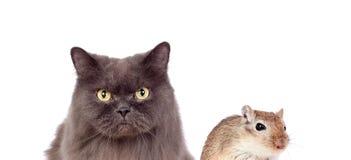 Chat gris et souris brune amitié dangereuse Image libre de droits