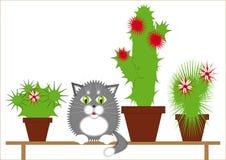 Chat gris parmi les cactus Photo libre de droits