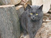 Chat gris près des rondins en bois Image stock