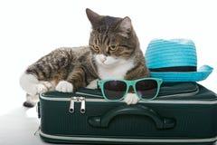 Chat gris sérieux sur une valise Photographie stock