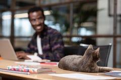 Chat gris s'étendant sur la table de bureau photos stock