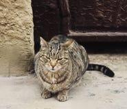 Chat gris sans abri grincheux Photographie stock