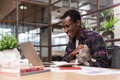 Chat gris se reposant dans des mains des employés de bureau image stock