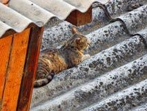 Chat gris se reposant sur le toit Images libres de droits