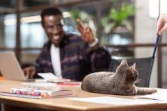 Chat gris se reposant sur une table d'ordinateur près de son propriétaire photos stock
